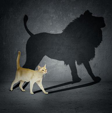 кошка лев